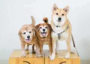 渡辺様犬3匹ベスト修整